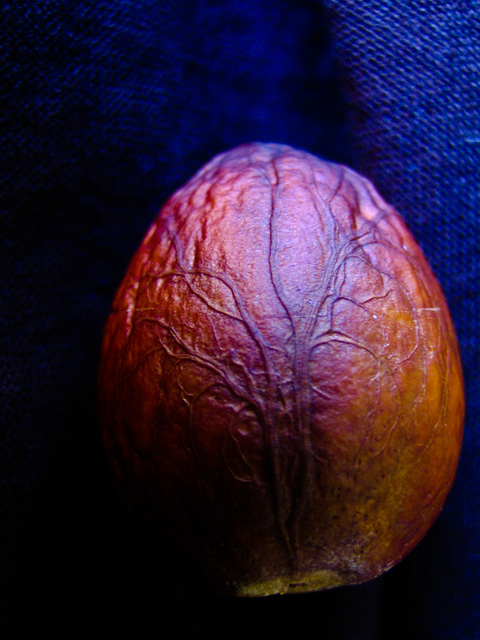 avocadopitonfabric.jpg
